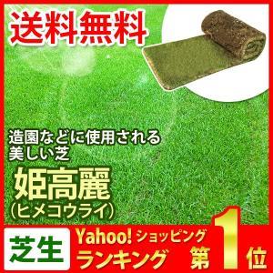 芝生 天然芝 姫高麗芝(ヒメコウライ芝) ロール巻芝 (芝生 通販)|sun-wa