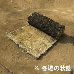 芝生 天然芝 姫高麗芝(ヒメコウライ芝) ロール巻芝 (芝生 通販)|sun-wa|02