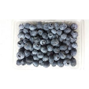 冷凍ブルーベリー(500g)|sunfarm