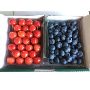 佐藤錦2L & ブルーベリー2L 詰合せ(贈答用) 各500g|sunfarm