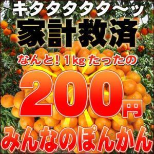 家計救済みんなの200円ぽんかん1kg 訳あり・不揃い