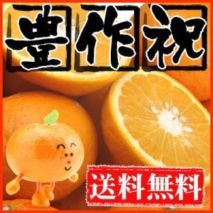 大豊作祝い甘夏8kg【送料無料】訳あり・不揃い...