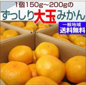 【規格外】訳あり大玉みかん2L・3Lサイズ20kg【送料無料】