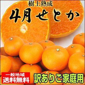 愛媛産 木なり甘熟4月せとか5kg 訳あり 【送料無料】...