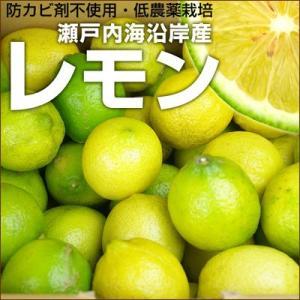 瀬戸内産 国産レモン1kg量り売り 訳あり・不揃い