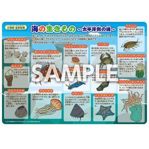 学習ポスター「海の生き物 -太平洋側の磯-」 小学生 理科 A5サイズ|sunrise-gogo