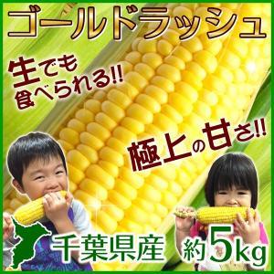 とうもろこし ゴールドラッシュ 千葉県産 約5kg 送料無料...