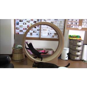 猫と遊んで運動不足解消! ねこクル 【受注生産】ねこ/ネコ/猫/回転/運動/CAT/肥満/WHEEL/室内/タワー|suwako-mall