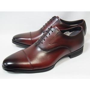 マドラス 正規品 モデロ ストレートチップ madras MODELLO DM8001 BUG バーガンディ メンズ ビジネスシューズ 防水 紳士靴|suzuchu-footwear