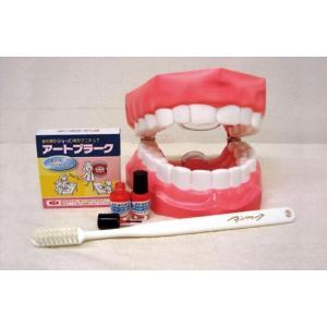 アートプラーク(人工歯垢)・ジョーズ(歯型模型)セット (歯みがき指導用) suzumori