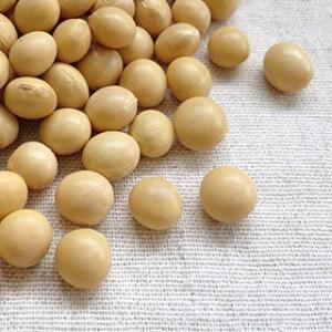 大豆 5kg 2020年 岩手県産 里のほほえみ 業務用パック ※例年より粒が小さくなっております
