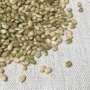 緑米 500g 平成28年 石川県産 送料無料 メール便|suzuya-rice