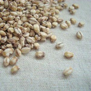 もち麦 ダイシモチ 1kg 平成30年 国産 徳島県|suzuya-rice