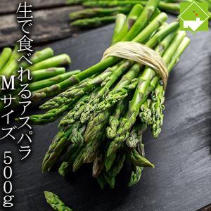 アスパラ 北海道 富良野産 ハウス栽培 グリーンアスパラ Mサイズ 500g 送料無料 4月上旬から5月上旬配送