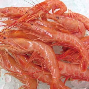 冷凍食品 業務用 アルゼンチン 赤海老 20/30 2kg 約50尾 お刺身 寿司ネタ エビ シーフード|syokusai-netcom