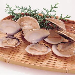冷凍食品 業務用 天然はまぐり 殻付  500g   貝・蛤・ハマグリ    お弁当 椀種 鍋物 酒蒸し 貝 はまぐり 殻付|syokusai-netcom