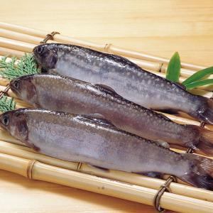 冷凍食品 業務用  冷凍岩魚 1kg  10尾入  いわな イワナ    お弁当 塩焼き 甘露煮 イワナ 岩魚 塩焼き|syokusai-netcom