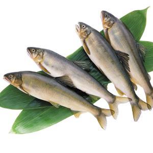 冷凍食品 業務用 冷凍鮎 (1kg11尾 1尾全長約18cm)     お弁当 素焼き 天ぷら 夏 魚|syokusai-netcom