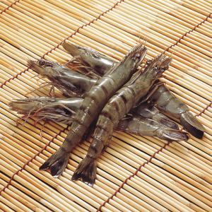 冷凍食品 業務用 ブラックタイガー 有頭 40尾 1.3kg    お弁当 天ぷら フライ エビ 海老 ブラックタイガー|syokusai-netcom
