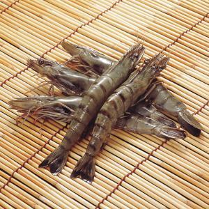 冷凍食品 業務用 ブラックタイガー 有頭 50尾 1.3kg    お弁当 天ぷら フライ エビ 海老 ブラックタイガー|syokusai-netcom