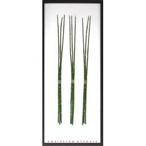 F-style リーフパネル・(葉っぱのフレーム)・Equisetum hyemale / トクサ 425x1015x30mm  2.8Kg|syoukai-tv
