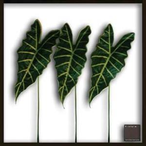 F-style リーフパネル・(葉っぱのフレーム)・625x625x30mm Alocasia Amazonica|syoukai-tv