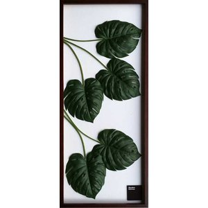 F-style Frame Monstera deliciosa|syoukai-tv
