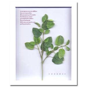Herbe frame mint(ハーブフレーム) (ハーブフレーム・精密な人工観葉植物) W310xH385xD20mm 1.3kg|syoukai-tv