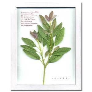 Herbe frame sage(ハーブフレーム) (ハーブフレーム・精密な人工観葉植物) W310xH385xD20mm 1.3kg|syoukai-tv