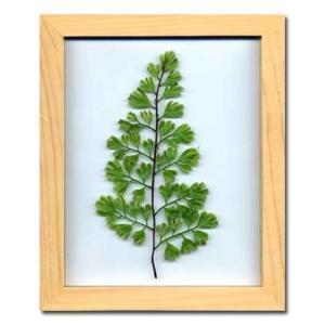 PLANT Frame (プラントフレーム・精密な人工観葉植物)・スタンドタイプ W225×H275×D15mm 0.6kg Adiantum|syoukai-tv