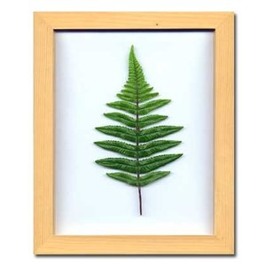 PLANT Frame (プラントフレーム・精密な人工観葉植物)・スタンドタイプ W225×H275×D15mm 0.6kg Leather Fern|syoukai-tv