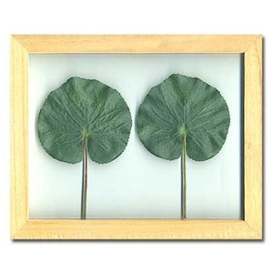 PLANT Frame (プラントフレーム・精密な人工観葉植物)・スタンドタイプ W225×H275×D15mm 0.6kg Galax|syoukai-tv