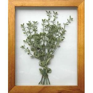 PLANT Frame (プラントフレーム・精密な人工観葉植物)・スタンドタイプ W225×H275×D15mm 0.6kg Thymus|syoukai-tv
