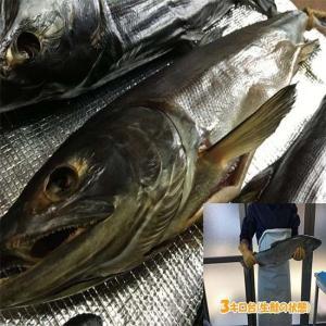 塩引き鮭3キロ台|新潟県村上市から産地直送|身おろし切り身加工|冷蔵発送|syowamaru|02