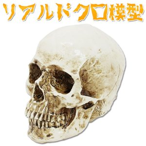 [商品説明] リアルな頭骨模型です。 ハロウィンパーティーやお化け屋敷の装飾や雰囲気作りにいかがでし...