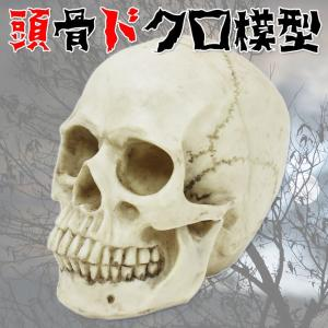 ドクロ ガイコツ 模型 頭蓋骨 頭骨 ハロウィン 装飾 リアル髑髏 Bタイプ|systemstyle