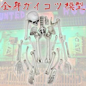全身骸骨 ガイコツ ドクロ 模型 ハロウィン ホラー 装飾|systemstyle
