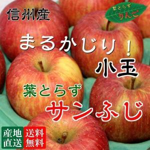 信州産 りんご 葉とらず サンふじ 5kg『小玉』(20-23玉)安心安全 是非皮ごと食べてください。