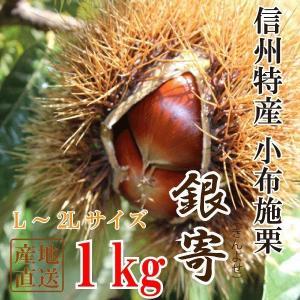 栗 信州産 小布施栗(銀寄)無薫蒸1kg(L~2Lサイズ)