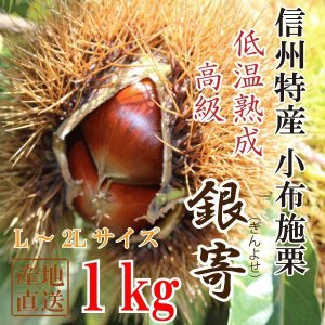 信州産 小布施栗(銀寄)【低温熟成・無薫蒸】1kg(L〜2Lサイズ)