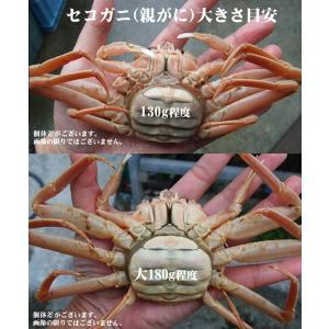 (かに カニ 蟹 特産品 名物商品)セコガニ(親がに・勢子がに)訳あり[生]大 3枚セット(180g前後が3枚入)送料無料*|syun-sakana|03