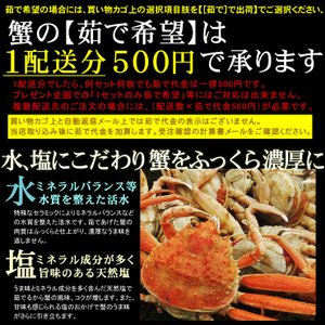(かに カニ 蟹 特産品 名物商品)セコガニ(親がに・勢子がに)訳あり[生]大 3枚セット(180g前後が3枚入)送料無料*|syun-sakana|05