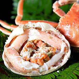 (かに カニ 蟹 特産品 名物商品)セコガニ(親がに・勢子がに)訳あり[生]1kgセット(5-10枚程度入)送料無料(山陰産)*1配送先で2セット以上購入で1セット増量|syun-sakana|03