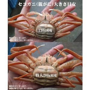 (かに カニ 蟹 特産品 名物商品)セコガニ(親がに・勢子がに)訳あり[生]大 5枚セット(180g前後が5枚入)送料無料*|syun-sakana|03