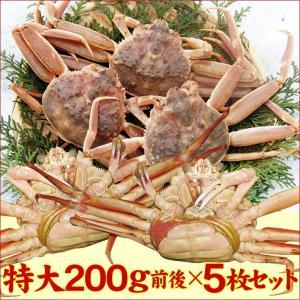 (かに カニ 蟹 特産品 名物商品)セコガニ(親がに・勢子がに)訳あり[生]大 5枚セット(180g前後が5枚入)送料無料*|syun-sakana|04