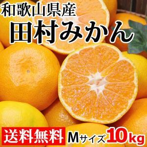田村みかん Mサイズ 10kg 送料無料 和歌山県産