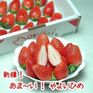 いちご「やよいひめ」30粒 送料無料!!