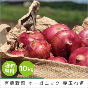 有機野菜 オーガニック 赤玉ねぎ 10kg 化学肥料・農薬不使用 農家直送 送料無料|syunsaifarm