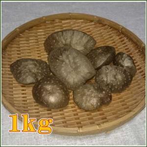 国産 自然栽培 宇宙イモ/厳選 形の良いエアーポテトお試し1kgセット/そらいも/ヤマノイモ/むかご/たこ焼きの具・お好み焼きの具|t-herb|02