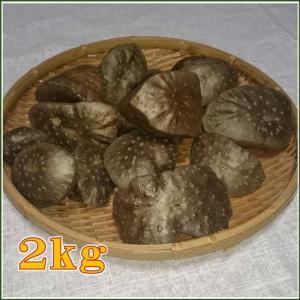 国産 自然栽培宇宙イモ/厳選 形の良いエアーポテト2kgセット/そらいも/ヤマノイモ/むかご/たこ焼きの具・お好み焼きの具|t-herb|02